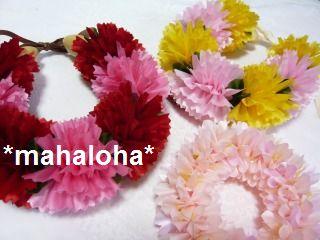 Carnationsakura